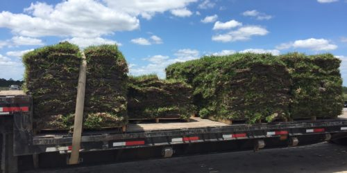 sod delivery ,grandview,Ocala,Marion County,Florida
