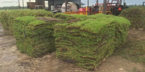 sod delivery,sod services,grandview,Ocala,Marion County,Florida
