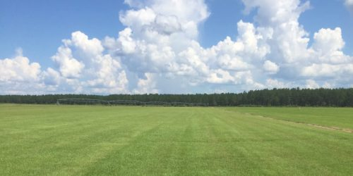 sod field,centipede,sod,sod services, grandview,ocala,silver springs,ft mccoy