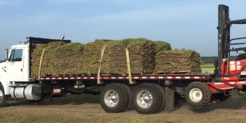 sod,delivery